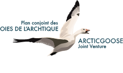 The Arctic Goose Joint Venture (AGJV)