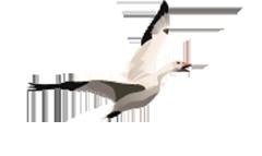 Arctic Goose Joint Venture