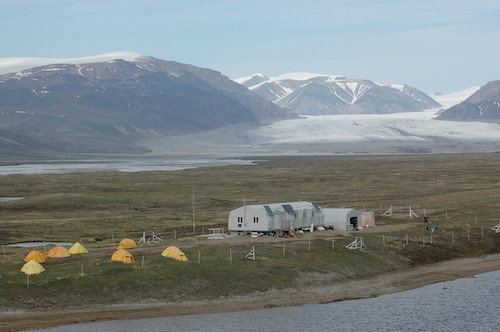 Greater Snow Goose Field Studies, Bylot Island 1988 to Present