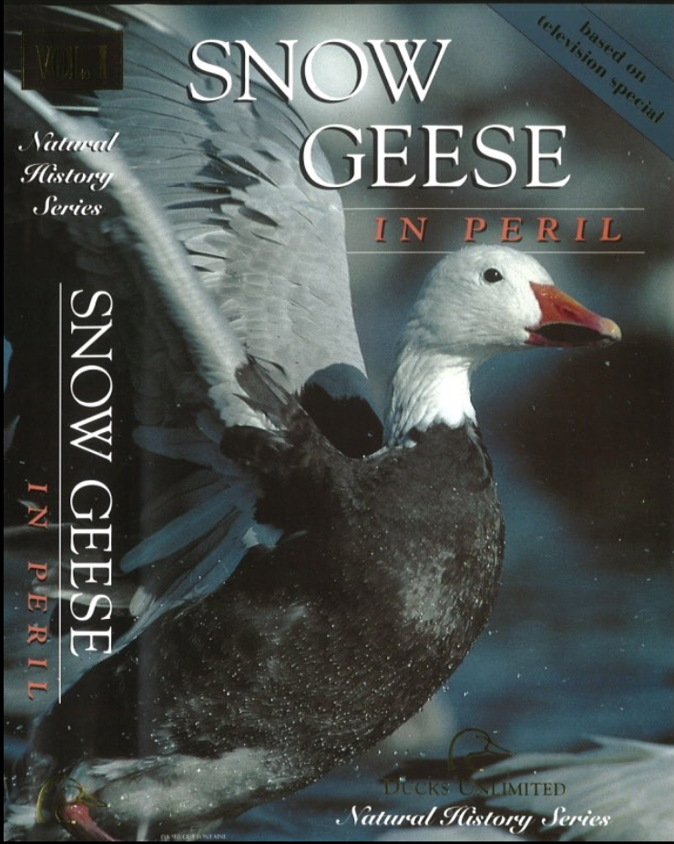 Snow Geese in Peril