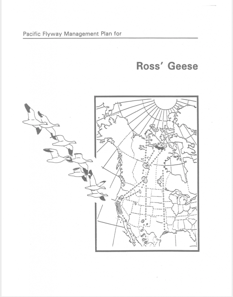 Ross's Goose Management Plan