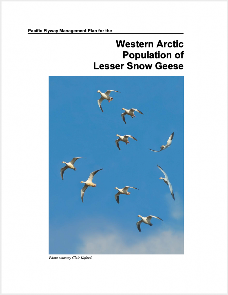 Western Arctic Lesser Snow Geese Management Plan